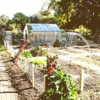 Greenhouse in small field