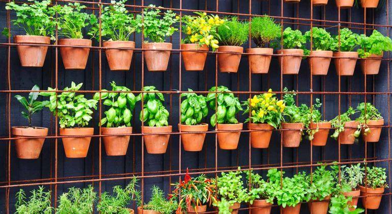 How To Create A Vertical Vegetable Garden