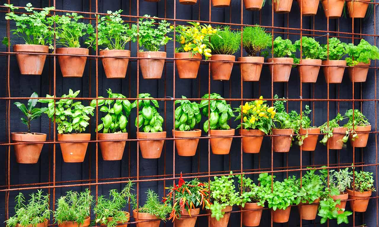 Create a vertical vegetable garden